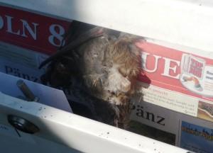 P1020453 Ratte im Briefkasten - web groß